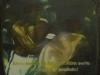 Alì Boma Ye - 1998 - sequenza-8 di Emilio Minotti